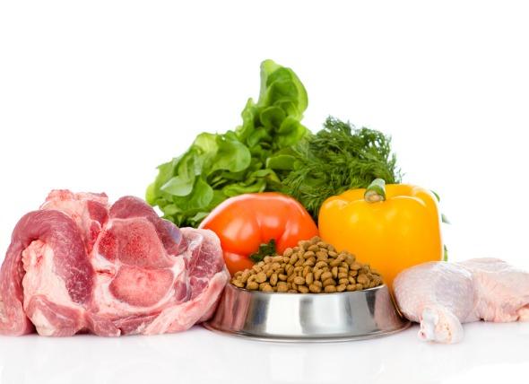 balanced-dog-food